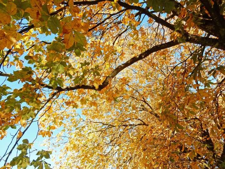 golden_leaves