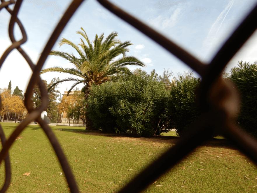 barcelona_palmtree