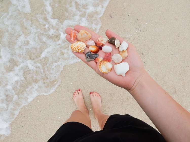 Dubai beach shells