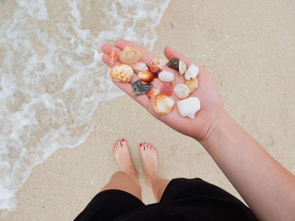 Dubai beach shells